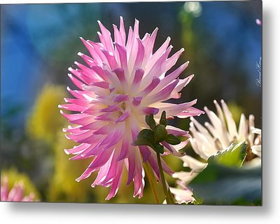 Metal Print featuring the photograph Flower Edition by Bernd Hau