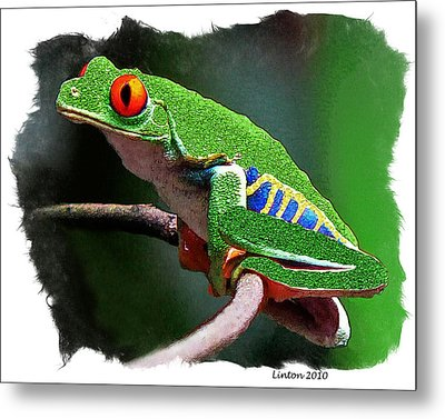 Red-eyed Leaf Frog Metal Print