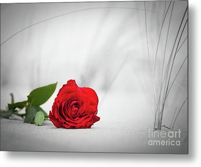 Red Rose On The Beach. Color Against Black And White. Love, Romance, Melancholy Concepts. Metal Print by Michal Bednarek