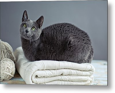 Russian Blue Metal Print by Nailia Schwarz