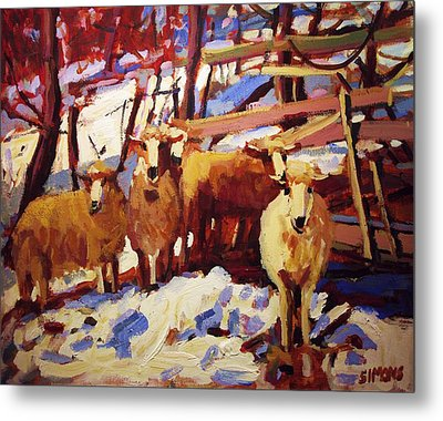 5 Sheep Metal Print by Brian Simons