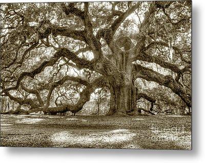 Angel Oak Live Oak Tree Metal Print