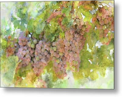 Grapes On The Vine Metal Print by Brandon Bourdages