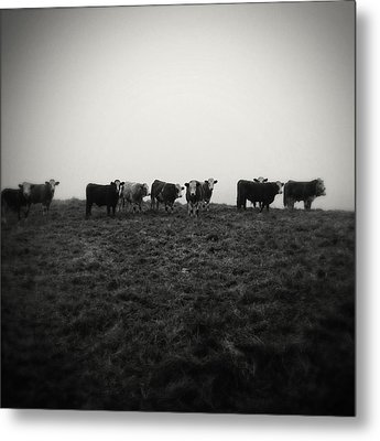 Livestock Metal Print by Les Cunliffe