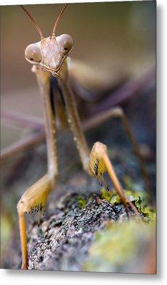 Mantis Metal Print by Andre Goncalves