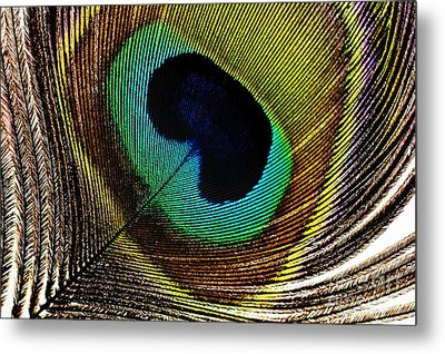 Peacock Feathers Metal Print by Mary Van de Ven - Printscapes