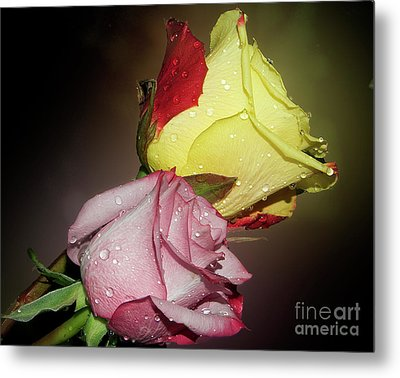 Metal Print featuring the photograph Roses by Elvira Ladocki