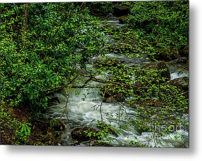 Metal Print featuring the photograph Kens Creek Cranberry Wilderness by Thomas R Fletcher