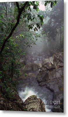 Misty Rainforest El Yunque Metal Print by Thomas R Fletcher