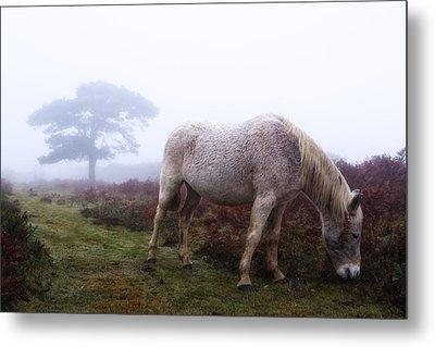New Forest - England Metal Print by Joana Kruse