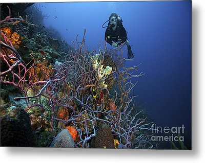 Scuba Diver Swims Underwater Amongst Metal Print by Terry Moore