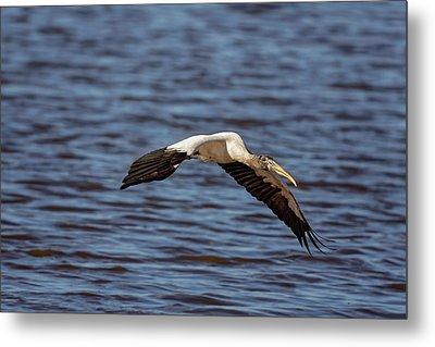Metal Print featuring the photograph Wood Stork by Peter Lakomy