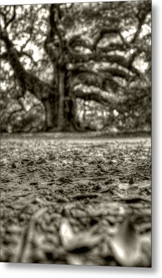 Angel Oak Live Oak Tree Metal Print by Dustin K Ryan