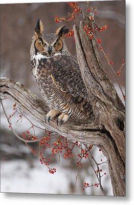 Great Horned Owl Metal Print by Cindy Lindow