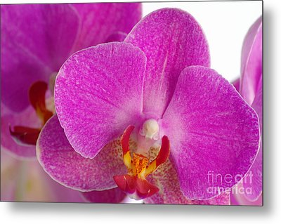 Metal Print featuring the photograph Pink Orchid by Dariusz Gudowicz