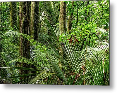 Metal Print featuring the photograph Tropical Jungle by Les Cunliffe