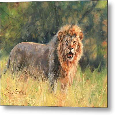 Metal Print featuring the painting Lion by David Stribbling