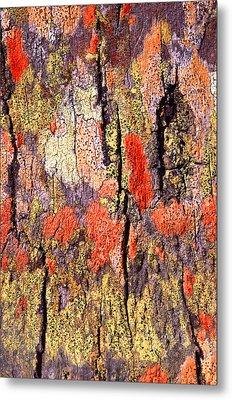 Tree Bark Metal Print by John Foxx