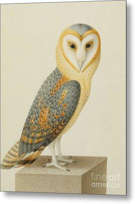 A Barn Owl Metal Print