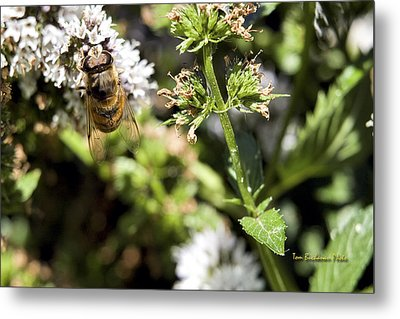 A Bee On A Flower Metal Print
