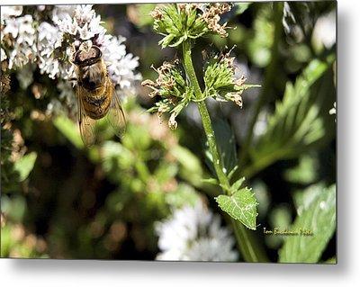 A Bee On A Flower Metal Print by Tom Buchanan
