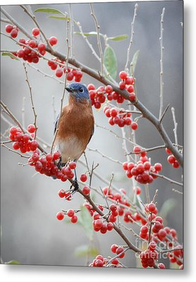 A Berry Good Morning Metal Print by Amy Porter