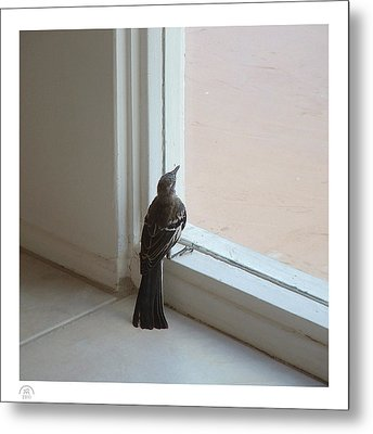 A Bird At A Plate Glass Window Metal Print
