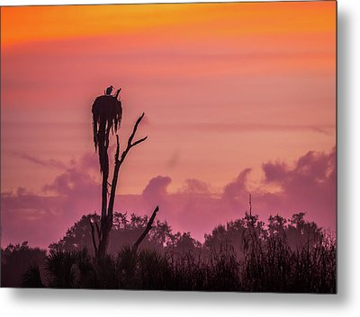 A Birdie Morning Metal Print