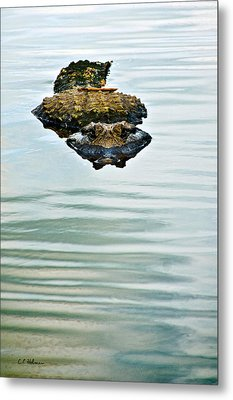 A Bit Of Curiosity Metal Print by Christopher Holmes
