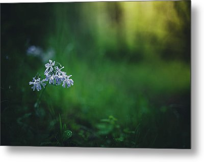 Metal Print featuring the photograph A Bit Of Forest Magic by Shane Holsclaw