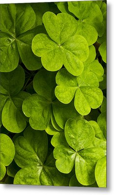 A Bit Of Green Metal Print by Carrie Cranwill