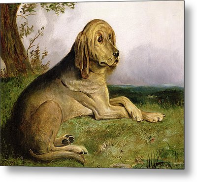 A Bloodhound In A Landscape Metal Print by English school