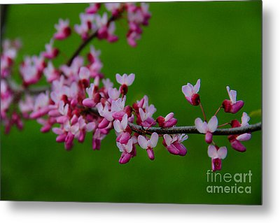 A Branch Of Spring Metal Print