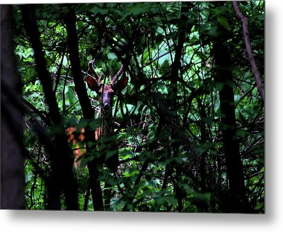 A Buck Peers From The Woods Metal Print
