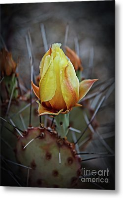 Metal Print featuring the photograph A Bud In The Thorns by Robert Bales