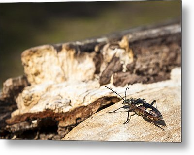 Metal Print featuring the photograph A Bugs Life by Stewart Scott