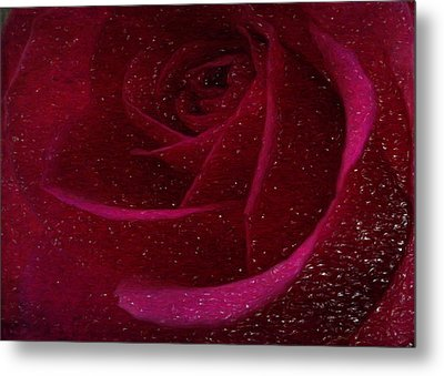 A Burgundy Rose In Snow Metal Print by Sarah Vernon