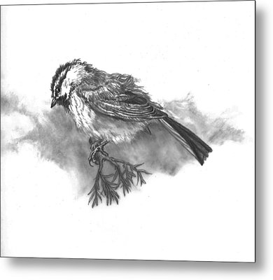 A Chickadee Named Didi Metal Print by Dawn Senior-Trask