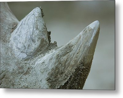 A Close-up View Of A White Rhinos Muddy Metal Print