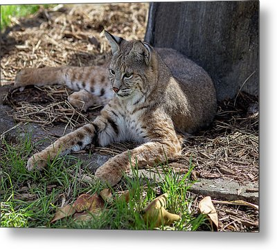 A Comfy Spot  Metal Print by Capt Gerry Hare