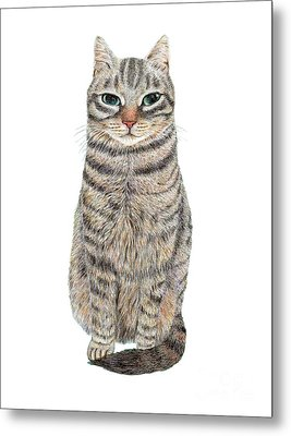 A Cool Tabby Metal Print