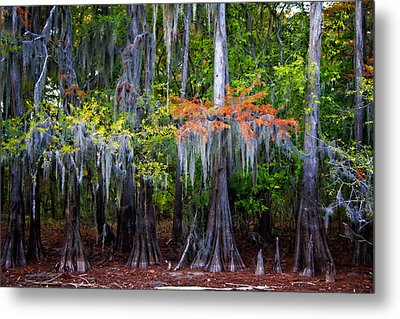 Metal Print featuring the digital art A Cypress Fall by Lana Trussell