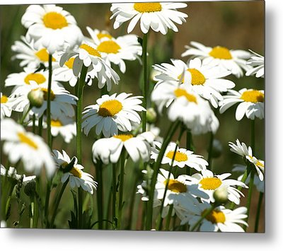 A Daisy A Day Metal Print by DeeLon Merritt