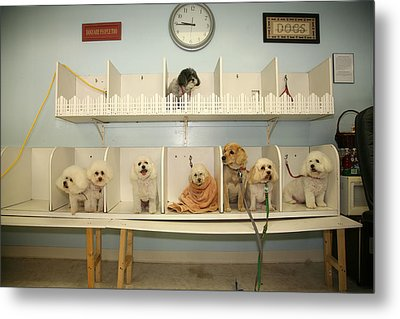 A Day At The Doggie Day Spa Metal Print by Michael Ledray