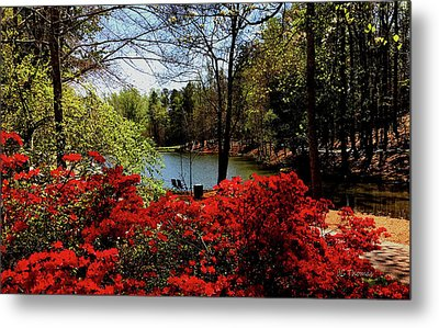 A Day In The Park Metal Print by James C Thomas