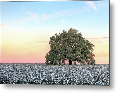 A Deeply Southern Sunrise Metal Print by JC Findley
