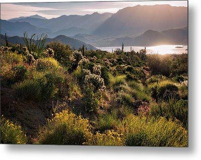 Metal Print featuring the photograph A Desert Spring Morning  by Saija Lehtonen