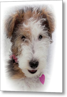 A Dog Named Butterfly Metal Print by Karen Wiles