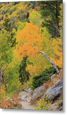 Yellow Drop Metal Print by David Chandler