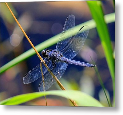 A Dragonfly  Metal Print